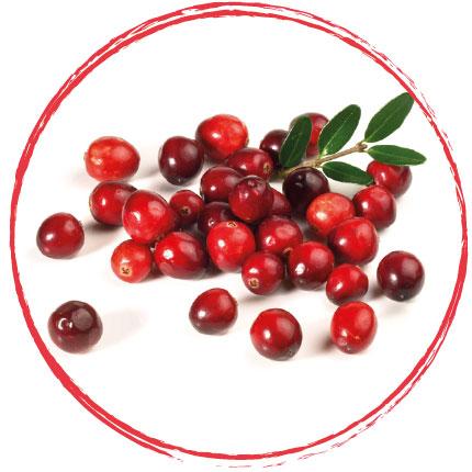 Cranberry surgelée