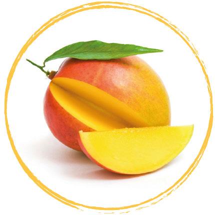 Mangue (cube) surgelée
